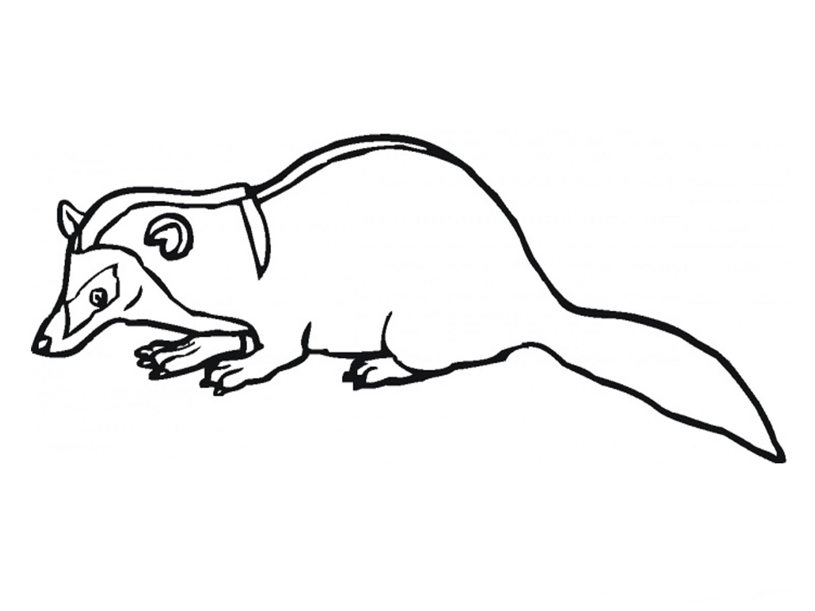 printable badger coloring pages - photo#17