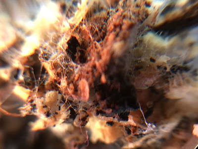 fungal hyphae in compost
