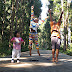 Wisata Puncak Kebun Teh Hill Top Sigembok - Jawa Tengah