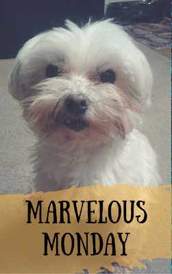 #MarvelousMonday, On My Kindle Book Reviews, Lexi, currently reading, TBR