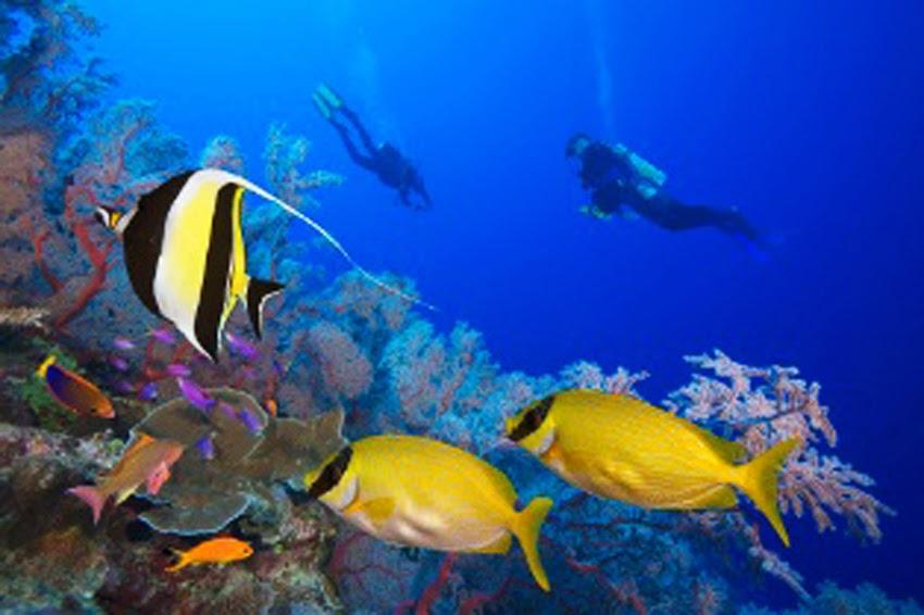 Descargar fondos de pantalla 3d con movimiento sharks - Descargar fondo de pantalla en movimiento gratis ...