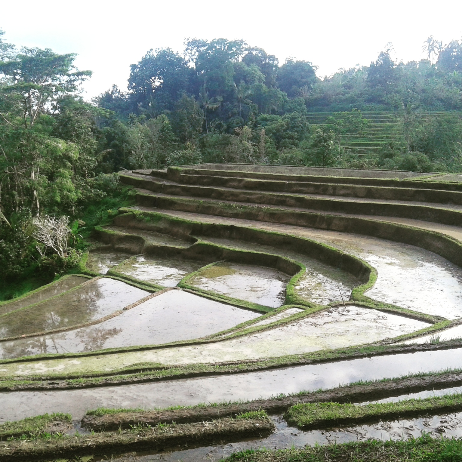 Special Rice Paddy Terrace Tour