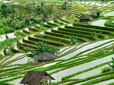 Terasering Desa Tegalalang, Ubud