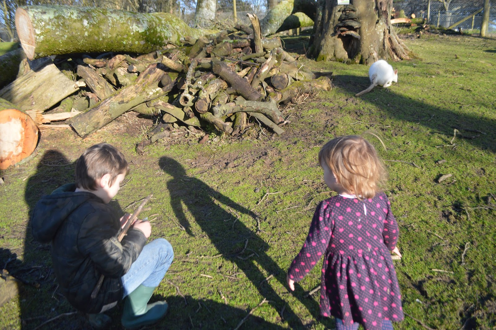 , First visit of the year to Manor Park (Anna's Welsh Zoo) #CountryKids