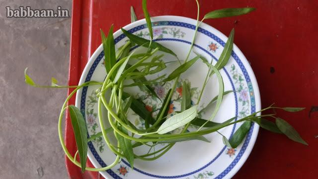 ปลูกผักบุ้งในตระกร้าสามารถกินได้หลายวันเลยทีเดียว