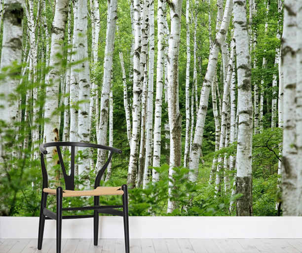 Koivu Tapetti Koivutapetti Koivumetsä Valokuvatapetit Metsä Summer Birch Trees