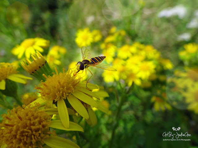 Insects & Wildflowers