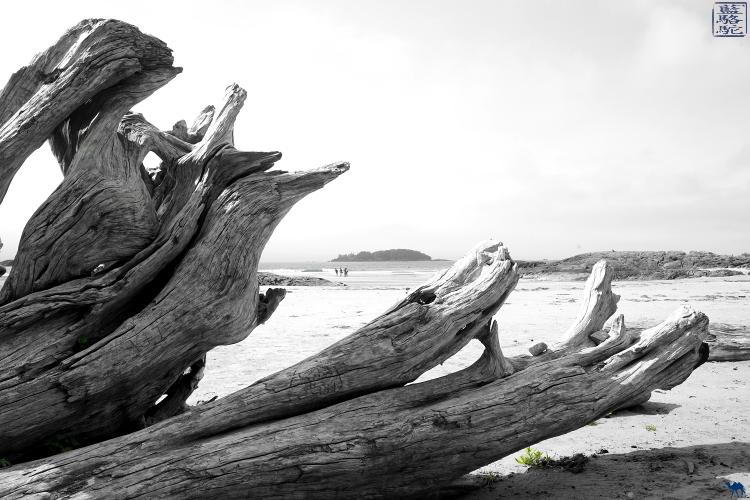 Le Chameau Bleu - Bois Flotté à Tofino  sur l'ile de Vancouver  au Canada