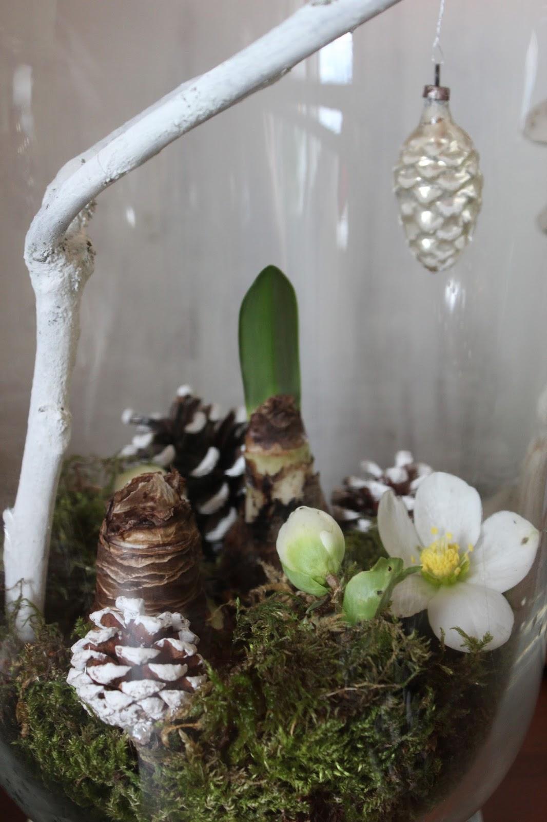 landidylle amaryllis vom letzen jahr. Black Bedroom Furniture Sets. Home Design Ideas