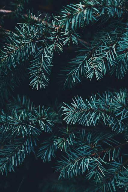 Dingfreiheit unter'm Weihnachtsbaum?