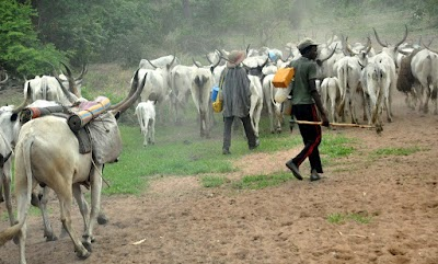 Herdsmen kill 16, injure two in Benue