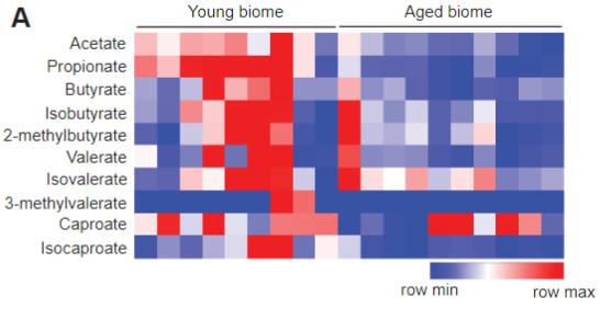 図:若年 高齢 腸内細菌叢のちがい