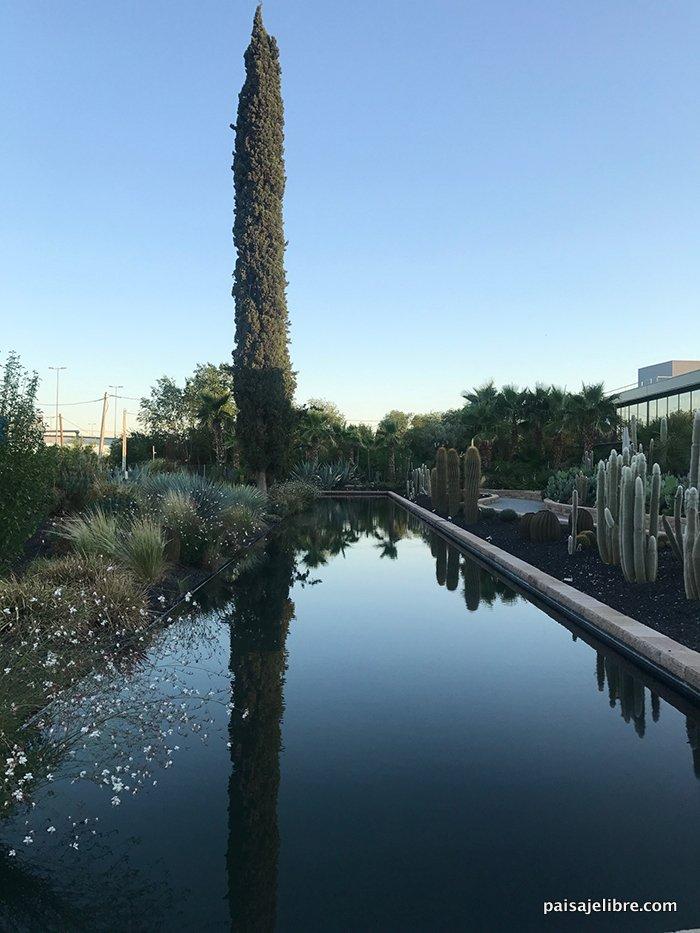 Descubre el jard n de desert city en madrid paisaje libre for Jardin cactus madrid