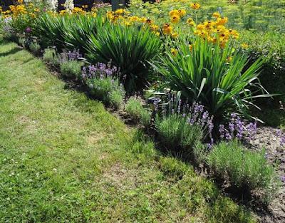 ogrody mikołów
