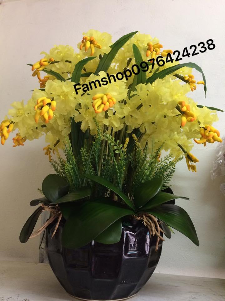 Hoa lan vang