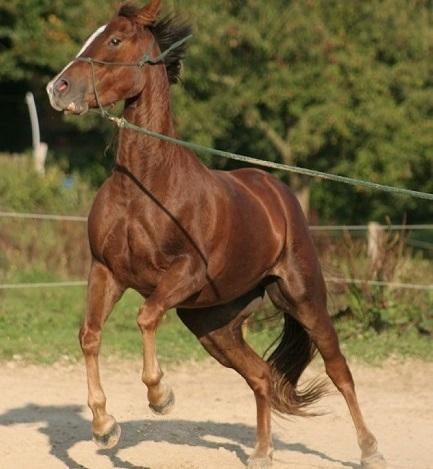 Nicola steiners horsemanship blog mit der schaufel das pferd manche pferde sind regelrecht streitlustig altavistaventures Images