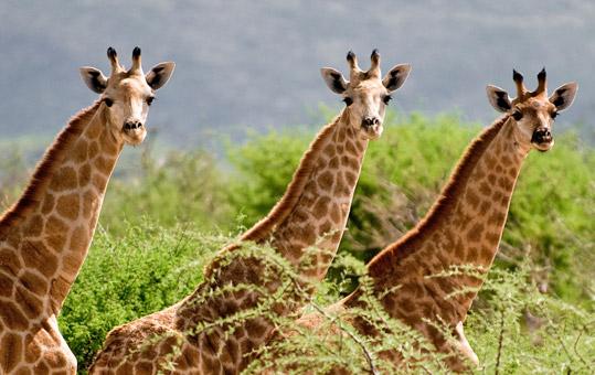 Erindi Game Reserve Omaruru, Namibia