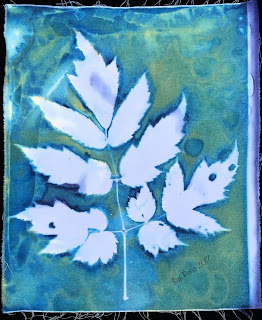 Wet Cyanotype_Sue Reno_Image 83