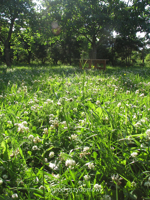 trwanik, chwasty, łąka