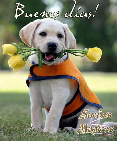 perrito con rosas amarillas Buenos días