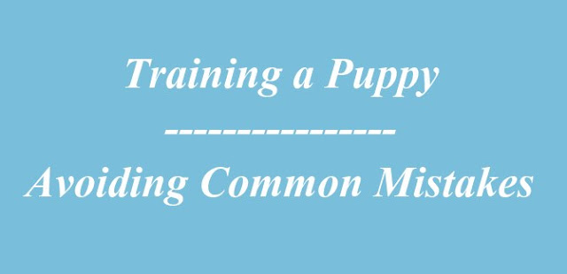 Training a Puppy