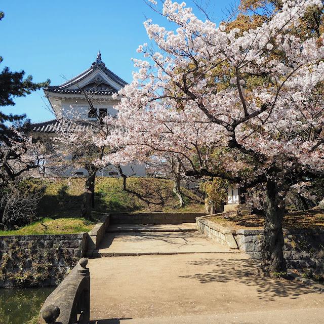 土浦城址 亀城公園 桜