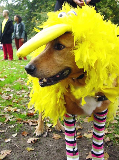 LiveLoveDIY: Halloween Costumes
