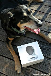 smiling dog security camera
