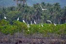 ratusan habitat burung di hutan kian hilang