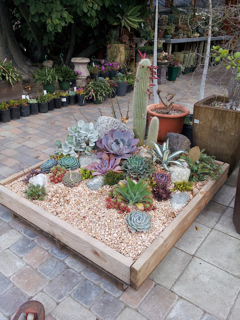 Drought tolerant mini landscape idea using succulents and gravel on a pallet