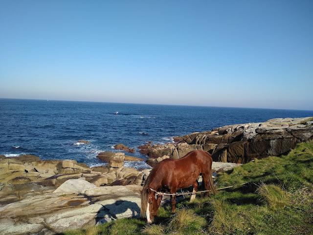 caballo a la orilla del mar