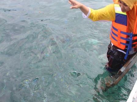 Memberi Makan Ikan di Pulau Lengkuas