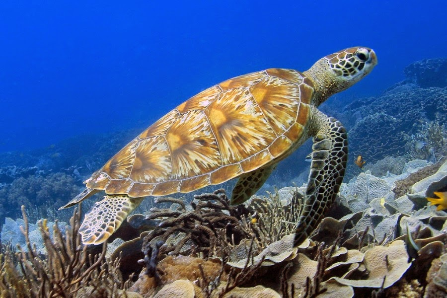 28 Astounding Pictures Of Sea Turtles Part 2 Best