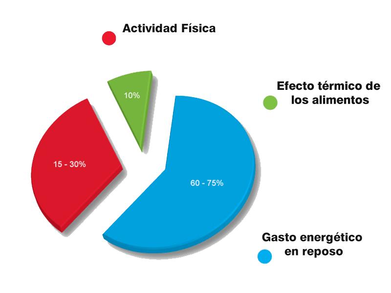 Resultado de imagen de tasa metabólica diaria