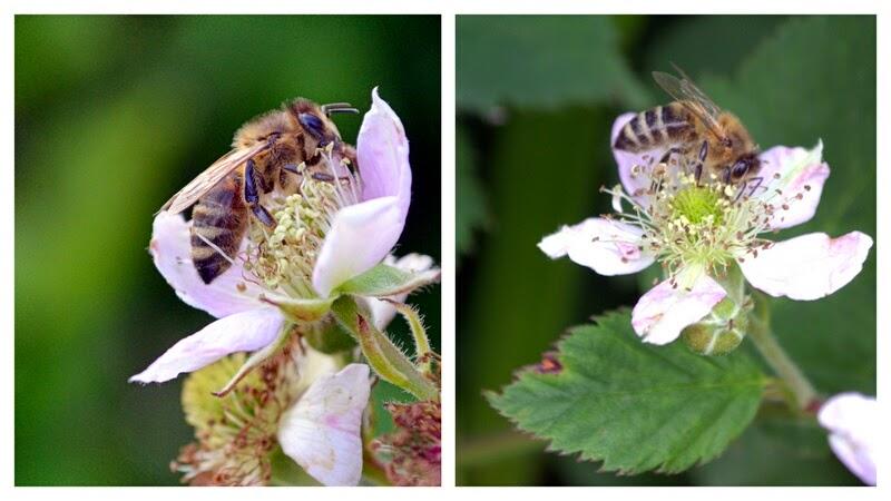pszczola, kwiaty, jablon, zapylanie, pszczola na kwiatkach