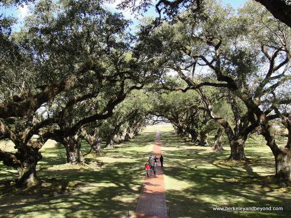 oak tree alley at Oak Alley Plantation in Vacherie, Louisiana