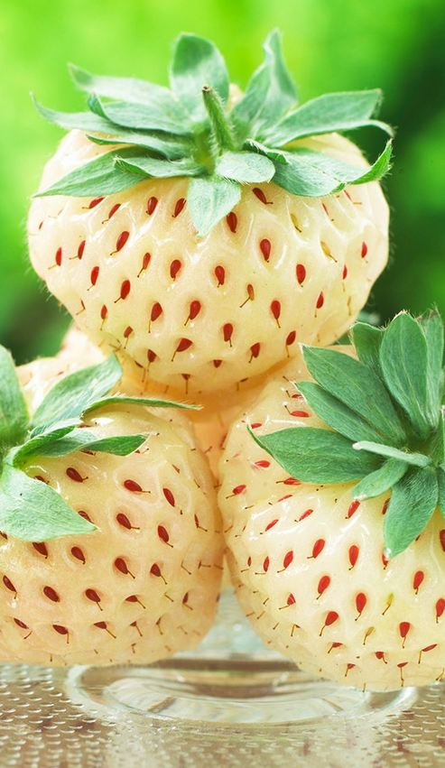 How To Grow Pineberries The Most Expensive Strawberry In