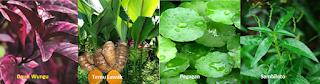 Sumber herbal biosir hpai - www.herbalpenawar.com - isman