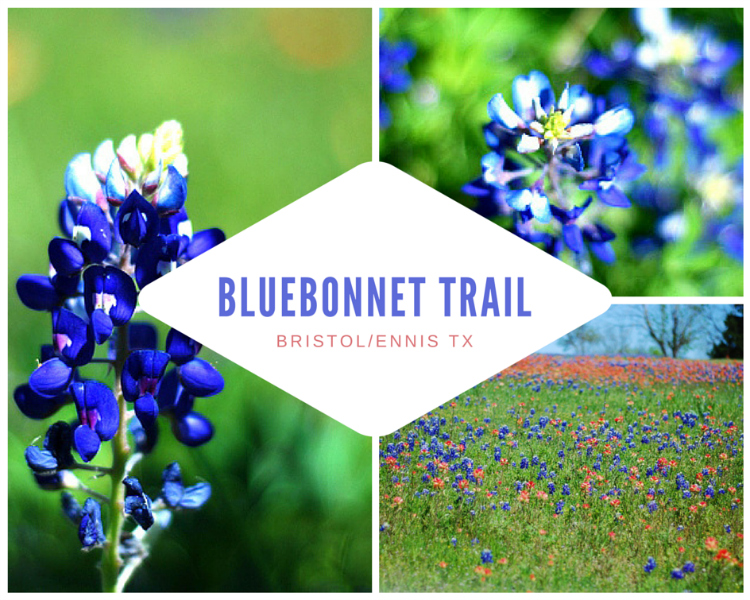 ENNIS TEXAS BLUEBONNET TRAIL - HALL AROUND TEXAS