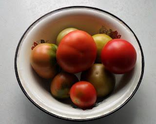 15 июня, начал собирать помидорки