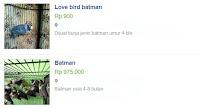 Harga lovebird batman