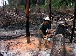 Jeda Penebangan Hutan Harus di Lakukan