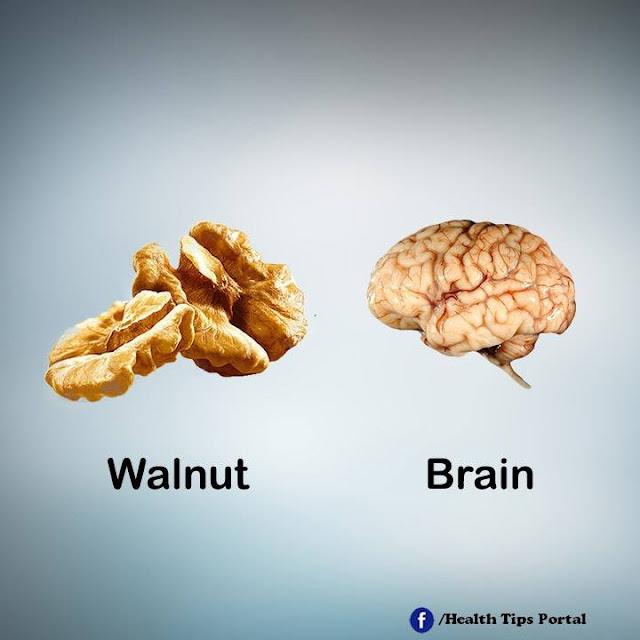khasiat walnut