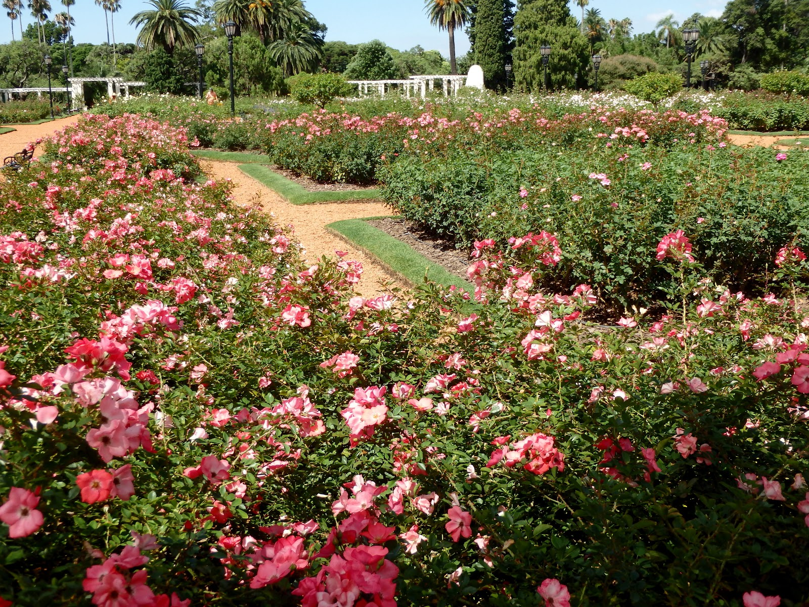 Suitcase and World: For the Rose Lover. Paseo del Rosedal.