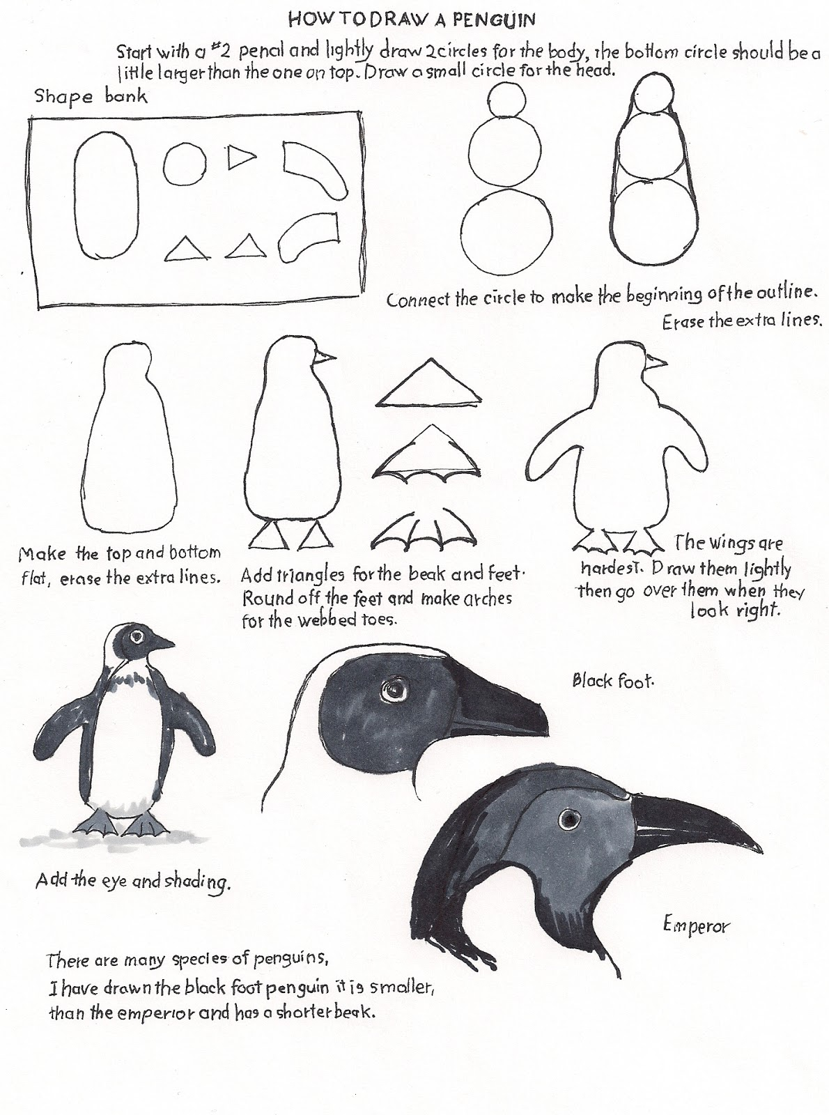 worksheet Penguin Worksheets how to draw worksheets for the young artist a penguin free worksheet