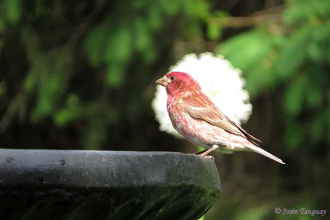 oiseau-bain d'oiseaux