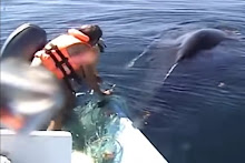 Angel saving Humpback whale