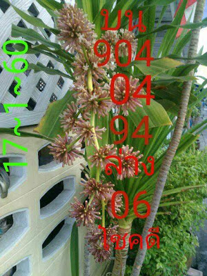 เด่นบน  904 04  94 เด่่นล่าง  06