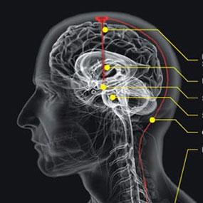 10 rahasia otak manusia