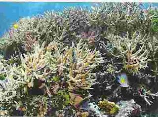 Contoh hewan berpori (Porifera) yang ada di laut